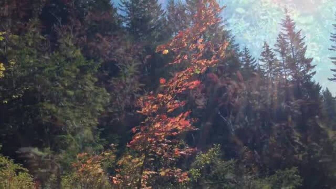 Explosion of fall color adds to joys of Northwest hiking. Where to go