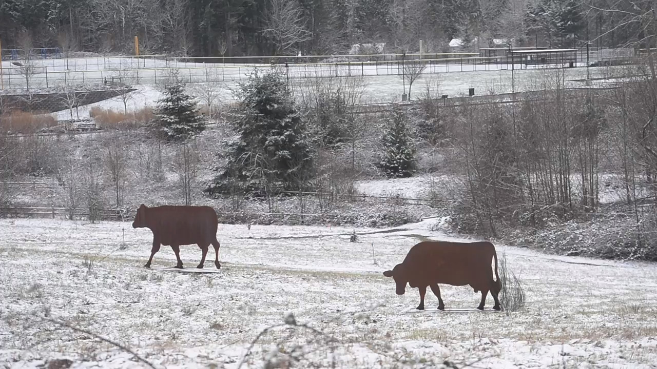 Fresh snow skipped Tacoma area but high winds possible in Cascade foothills
