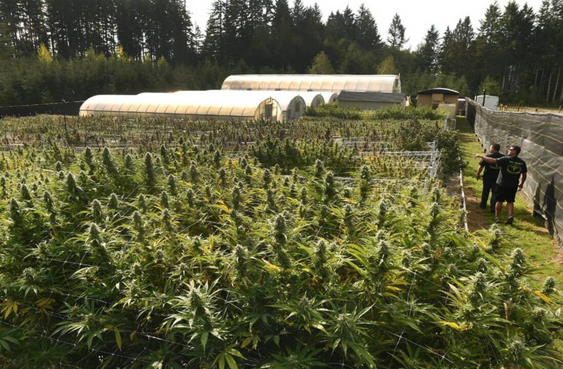 What's next for cannabis in Washington? State regulators see plenty of work ahead