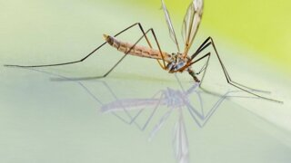How to get rid of mosquito breeding sites