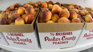 Parker County peach farmer reveals the secret to getting the tastiest peach