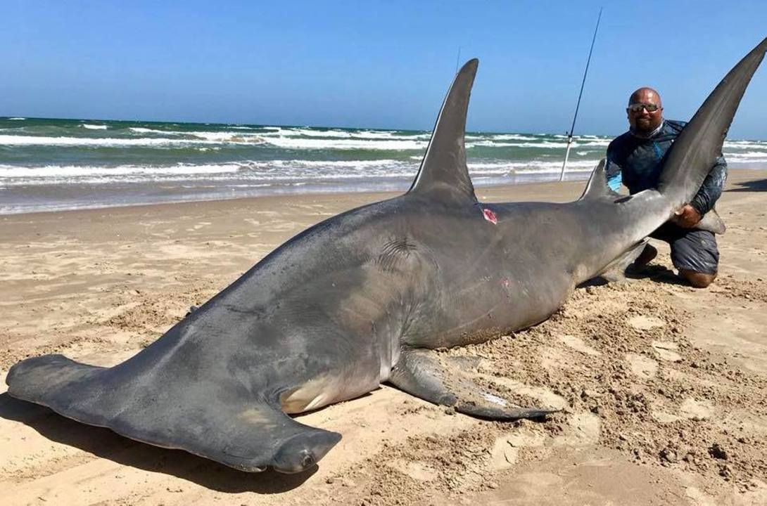 Long Island Fisherman Catches Shark