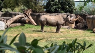 Take a sneak peek at Fort Worth Zoo's brand new African Savanna exhibit