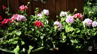Want to plant a garden but aren't trying to rip up your whole yard at once? Try this strategy