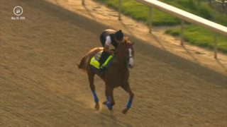 Watch Justify, who's up for a Triple Crown, train at Churchill Downs