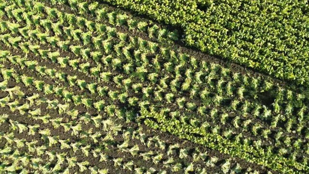 Central Kentucky farmer admits taking part in $480,000 crop fraud