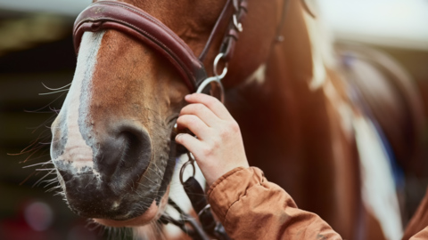 GOP's Andy Barr and Democrats back congressional review of Santa Anita horse deaths