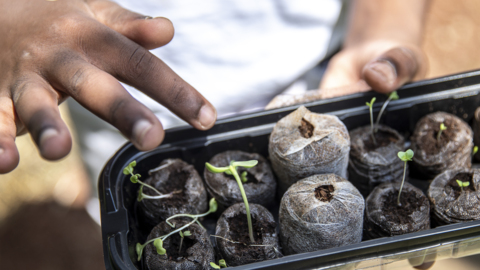 Garden challenge introduces kids to agriculture
