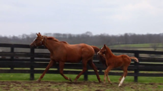 Derby winner's colt rejected by mother, only to be adopted by mare who lost her baby
