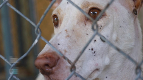 Caged canine blood colonies face new restrictions under proposed California law