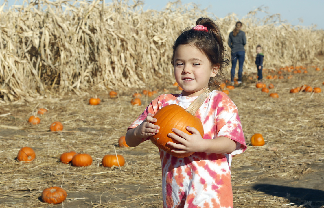 Perfect pumpkin picking tradition in Pasco