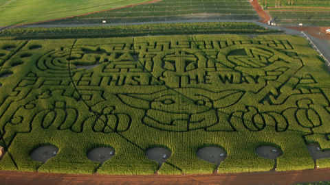 Use the Force to find your way to Baby Yoda in this Tri-Cities corn maze