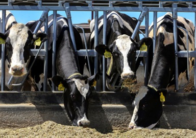Easterday son files to operate mega-dairy south of Tri-Cities