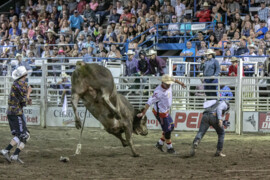 Rowdy Barry reflects on a lifetime of bulls, rodeos and memories