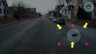 Bus passengers surprised by small cat chasing coyote