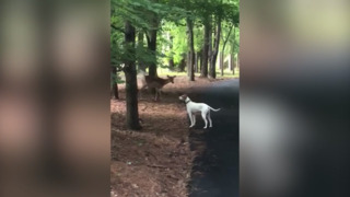 Kansan takes video of her dog with deer minutes before doe attacks