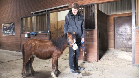 For Austin Miller, little horses lead to big smiles