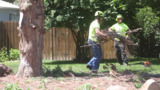 Urban foresters keep Boise the City of Trees
