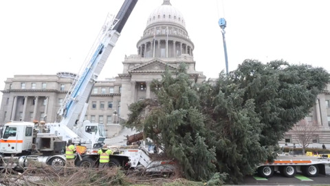 In 60 seconds: Capitol Christmas Tree goes up