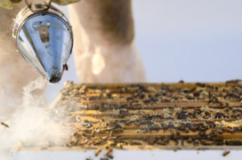 Whole Foods Market keeps bees on its roof to raise public awareness on bees' struggles