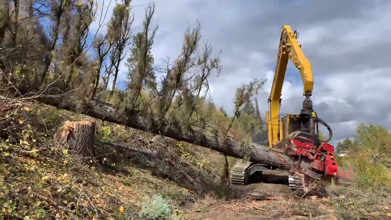 Idaho forest restoration projects are already well underway