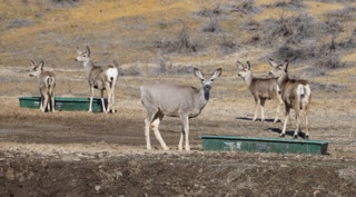 Deer vs. fence: Idaho Fish and Game to the rescue