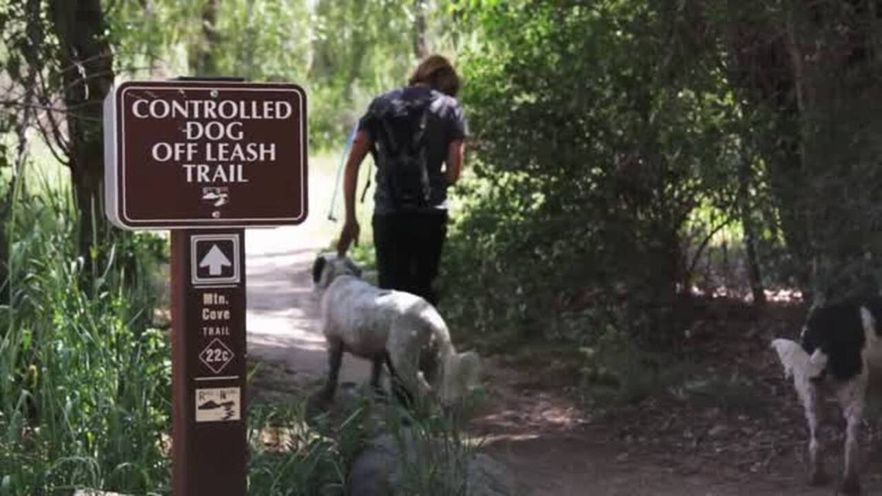 2019 Best Place to Take Your Dog: Boise Foothills