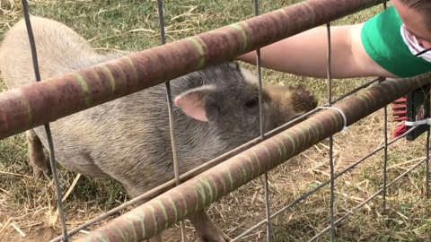 The little pot-bellied pig lost in Durham has found a new home