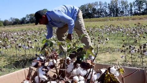 Black Cotton flips the narrative, giving crop and young farmers a new identity
