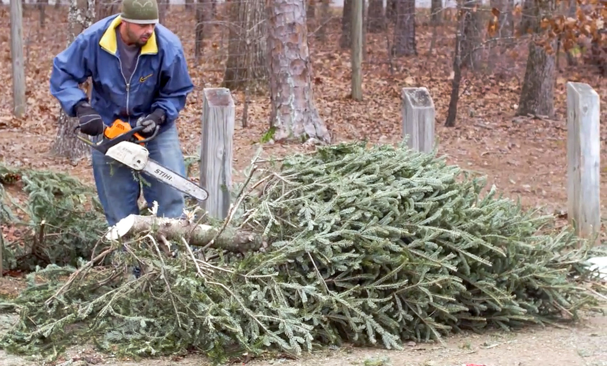 Where can I bring my Christmas tree and wreath? | Durham