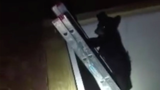 Bear cub climbs ladder to reunite with mother in Wisconsin