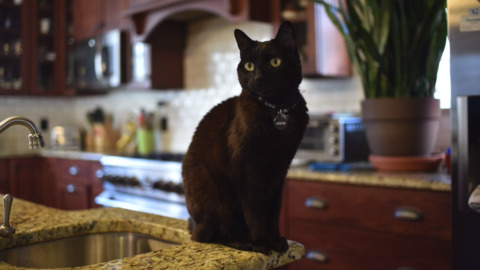 RIP, Alexei. Governor Cooper's black cat dies after lymphoma diagnosis