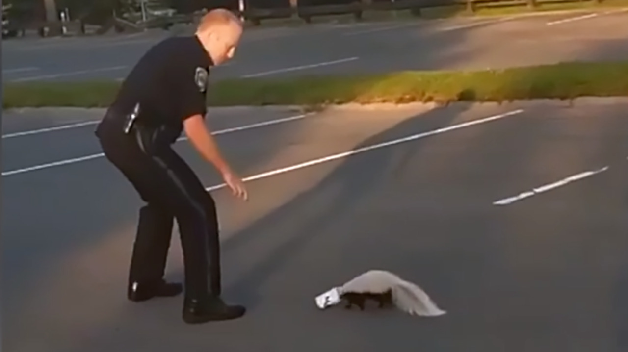 Officer gets 'stinky punishment' after helping skunk stuck in yogurt cup, video shows