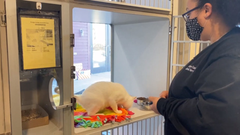 Orange County shelter cat learns to high five