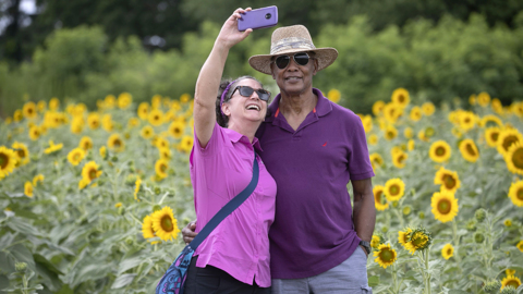 Raleigh will become the 'City of Sunflowers' again, with these prime spots for viewing