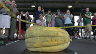 A cantaloupe breaking the Guinness World Record, grown right here in NC