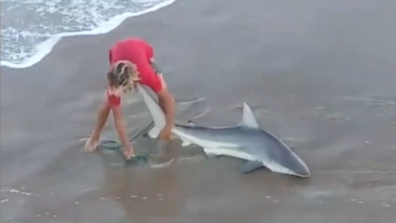 Four sharks in 40 minutes? Video shows fisherman reeling in sharks off the Outer Banks