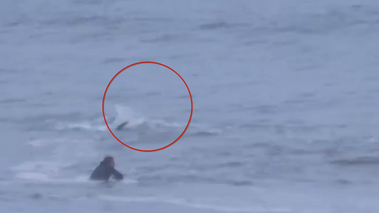 Shark feeds just feet away from surfer riding waves on the Outer Banks, video shows