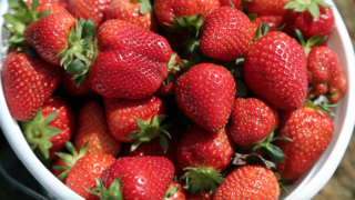 Strawberries are coming, just fashionably late.