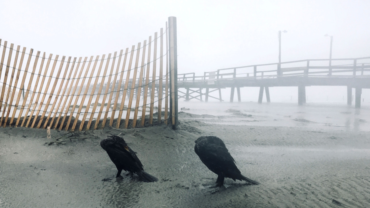 What do birds do during a hurricane? CuriousNC finds few ruffled feathers.