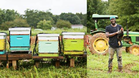 Young African American men raise food, bees and self-confidence at Sankofa Farms