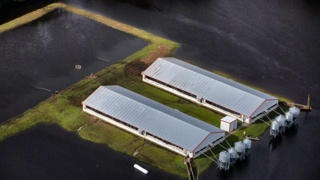 Senate budget delays hog-farm requirements meant to reduce water pollution