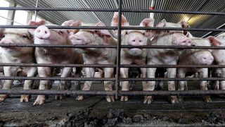 Complaints disappear and reappear, but the awful stench from NC hog farms remains