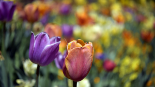 Sarah P. Duke Gardens has flower power after wet and mild Spring