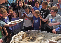 Dinosaur eggs 97 million years old arrive at NC Museum of Natural Sciences amid fanfare