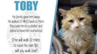 Cat walked miles to get back to family, they tried to euthanize him