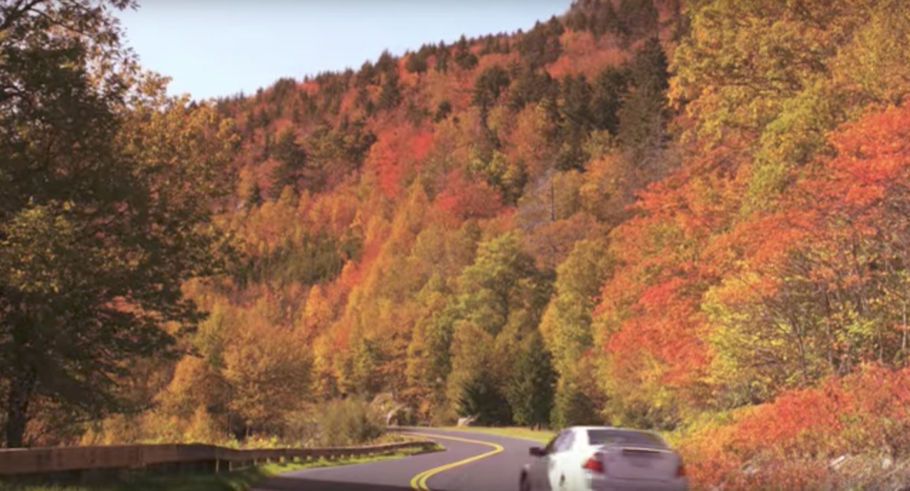 'Vibrant' fall leaves expected in NC mountains this year. When should you visit?