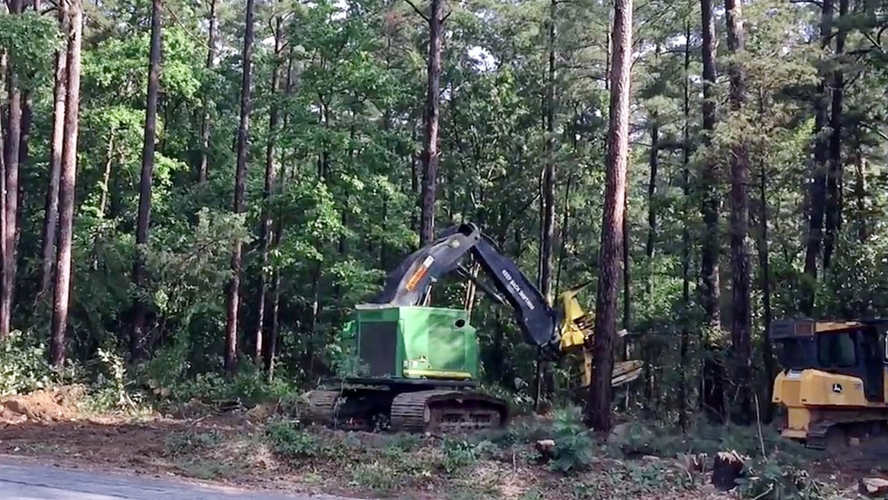To cut or not to cut? A disagreement over forest service plans to harvest NC trees.