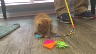 Kitten survived after York Co. teens tried to drown her and post a video, cops say