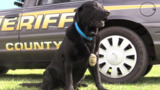 Beloved former member of York County Sheriff's Office dies. A 4-legged dog named Justice.